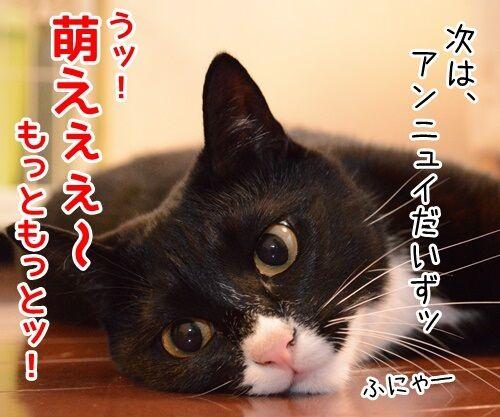 お詫びにかえて 猫の写真で4コマ漫画 3コマ目ッ