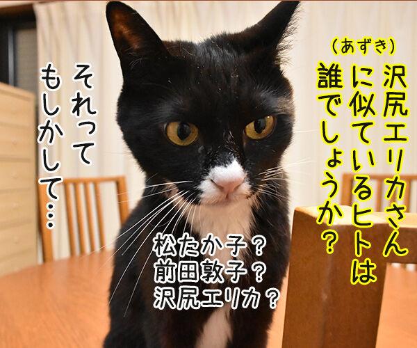 松たか子と前田敦子と沢尻エリカ 猫の写真で4コマ漫画 2コマ目ッ