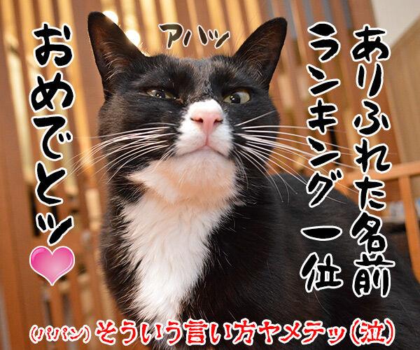 愛猫の名前ランキング発表ッ 猫の写真で4コマ漫画 4コマ目ッ