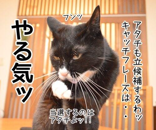 あずだいは参院選に立候補しますッ 猫の写真で4コマ漫画 3コマ目ッ