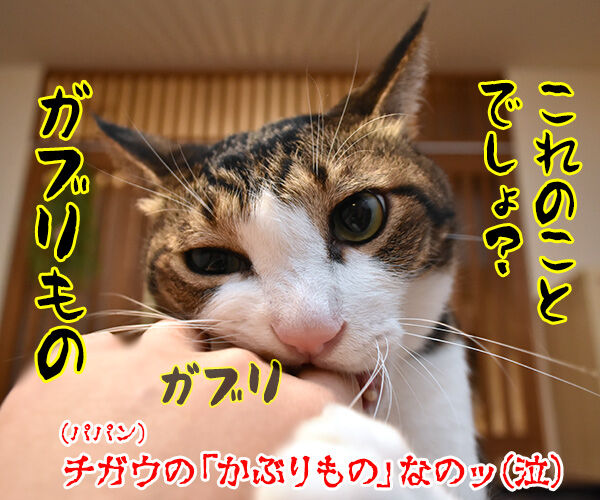 カプセルトイ『ねこのかぶりもの』の写真集が出たんですってッ 猫の写真で4コマ漫画 4コマ目ッ