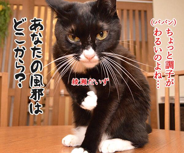 あなたの風邪はどこから? 猫の写真で4コマ漫画 1コマ目ッ