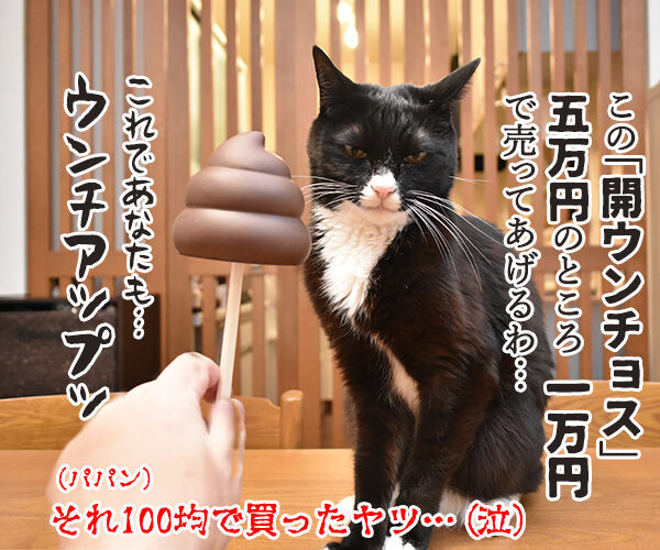 年賀状プレゼント ご応募アリガトゴザマシターッ 猫の写真で4コマ漫画 4コマ目ッ