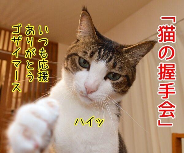 猫の握手会 猫の写真で4コマ漫画 1コマ目ッ