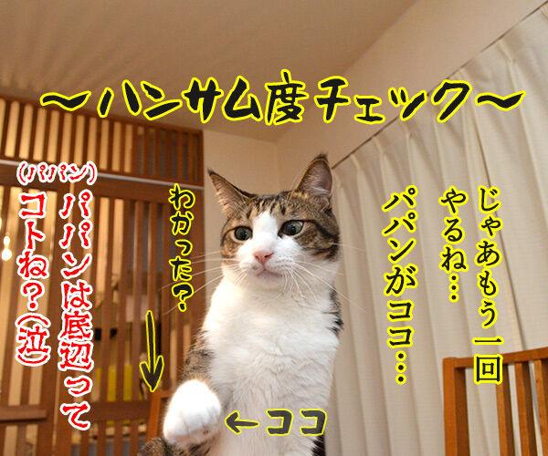 ボクがココで、パパンがココ 猫の写真で4コマ漫画 4コマ目ッ