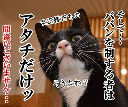 国語の授業 其の一 猫の写真で4コマ漫画 4コマ目ッ
