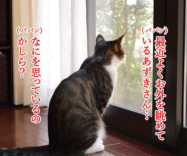 おそとには 猫の写真で4コマ漫画 1コマ目ッ