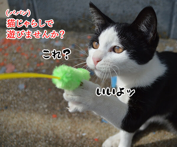 猫島 其の六 猫の写真で4コマ漫画 1コマ目ッ
