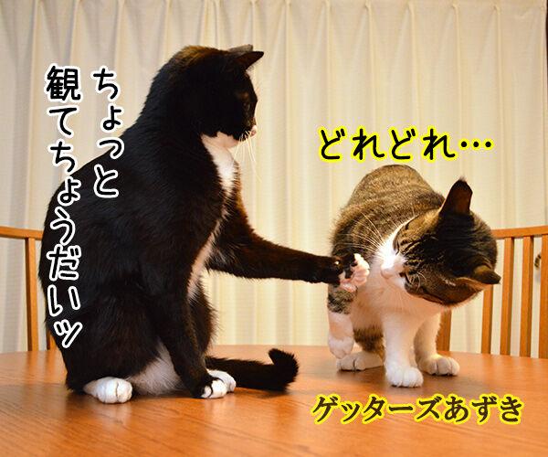 肉球うらない 猫の写真で4コマ漫画 2コマ目ッ
