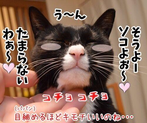 そこのハゲ、コチョりなさいッ 猫の写真で4コマ漫画 2コマ目ッ