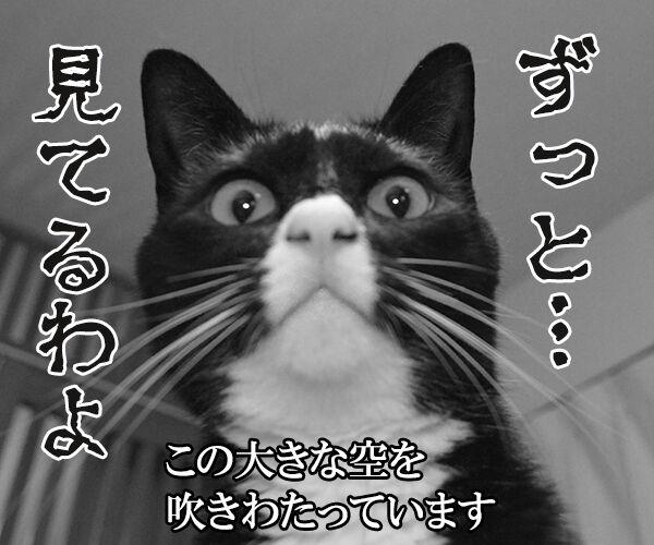千の風になって 猫の写真で4コマ漫画 4コマ目ッ