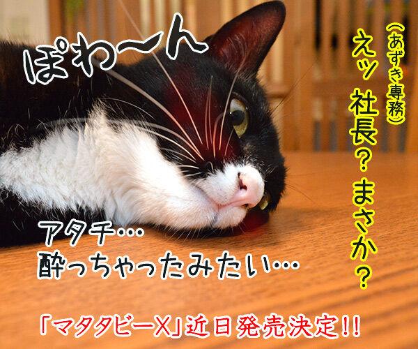 マタタビーX 猫の写真で4コマ漫画 4コマ目ッ