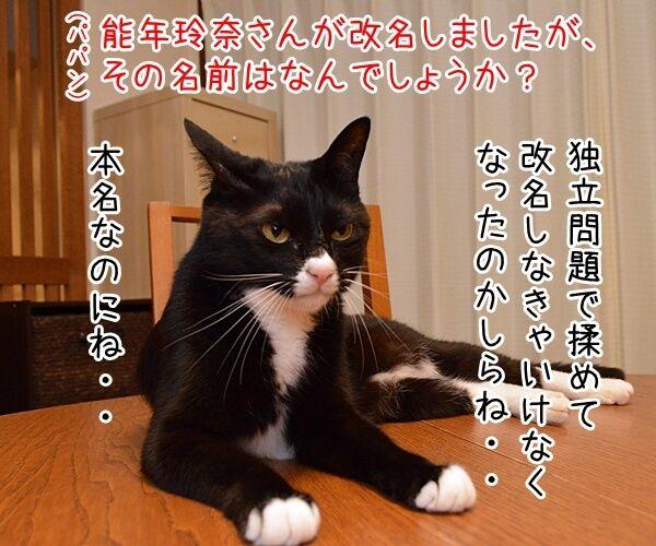 能年玲奈さんが「◯◯」に改名して再出発なんですってッ 猫の写真で4コマ漫画 1コマ目ッ