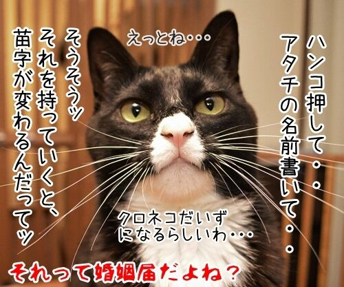クロネコヤマトが来るから帰らなくちゃッ 猫の写真で4コマ漫画 4コマ目ッ