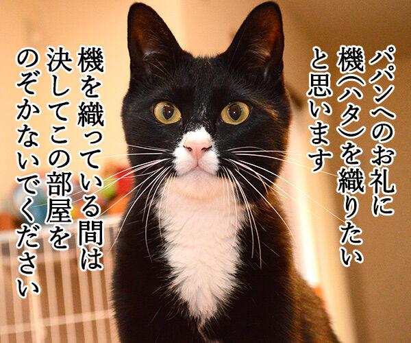 だいずの恩返し 猫の写真で4コマ漫画 1コマ目ッ