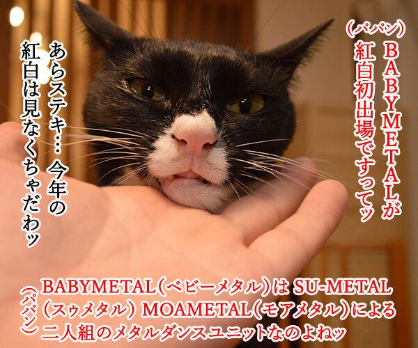BABYMETALが紅白歌合戦に初出場なんですってッ 猫の写真で4コマ漫画 1コマ目ッ