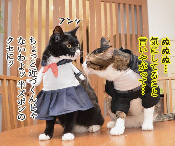 ヤンキーあずきとスケバンだいず 猫の写真で4コマ漫画 2コマ目ッ
