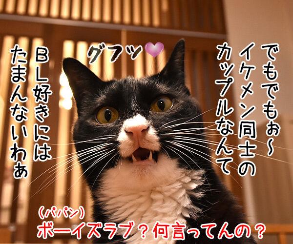 眞子さま ご婚約おめでとうございますッ 猫の写真で4コマ漫画 3コマ目ッ