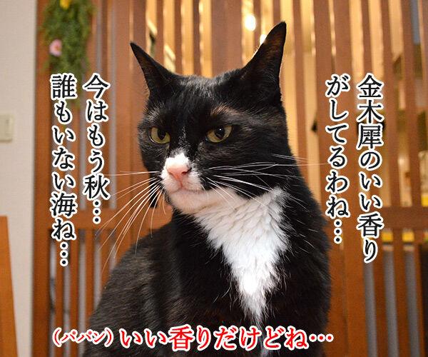 金木犀のいい香りがしてるの 猫の写真で4コマ漫画 1コマ目ッ