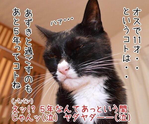 ネコの平均寿命が延びてるんですってッ 猫の写真で4コマ漫画 2コマ目ッ
