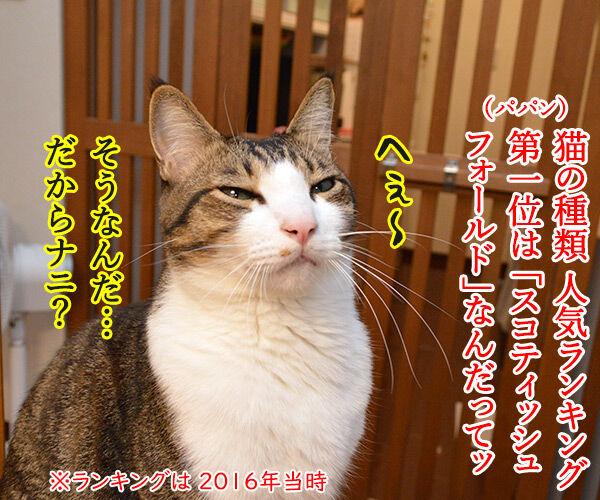 猫の種類 人気ランキング 猫の写真で4コマ漫画 1コマ目ッ