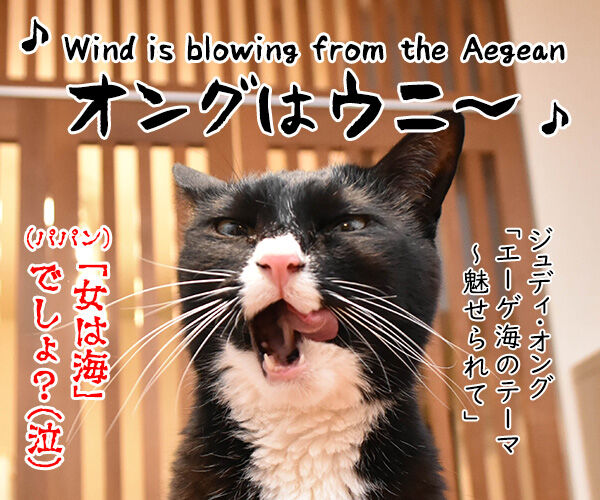 エーゲ海に浮かぶ島 シロス島の猫のお世話係を募集中なのッ 猫の写真で4コマ漫画 4コマ目ッ