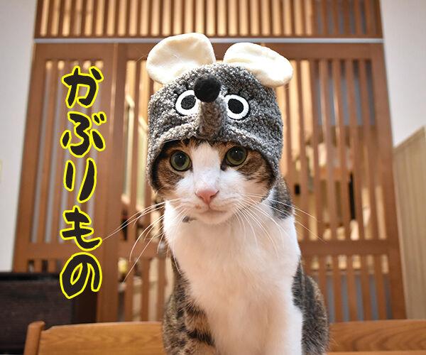 今までにした『かぶりもの』を集めてみたよッ 猫の写真で4コマ漫画 1コマ目ッ