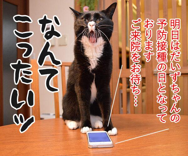 1件の新しいメッセージ 猫の写真で4コマ漫画 3コマ目ッ