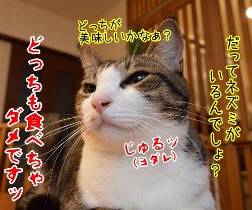 夏休みだから 猫の写真で4コマ漫画 4コマ目ッ