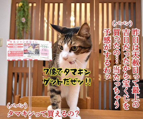 天赦日だから年末ジャンボを買ったのよッ 猫の写真で4コマ漫画 1コマ目ッ