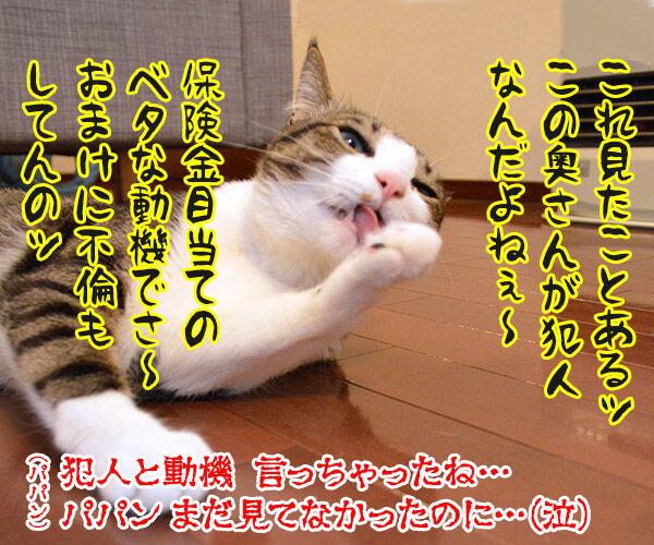 2時間ドラマの再放送 開始15分 猫の写真で4コマ漫画 4コマ目ッ