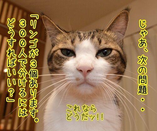 算数の問題ですッ!! 猫の写真で4コマ漫画 2コマ目ッ