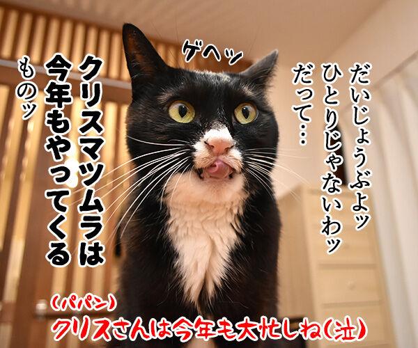 11月12月はカップル成立率が低いんですってッ 猫の写真で4コマ漫画 4コマ目ッ