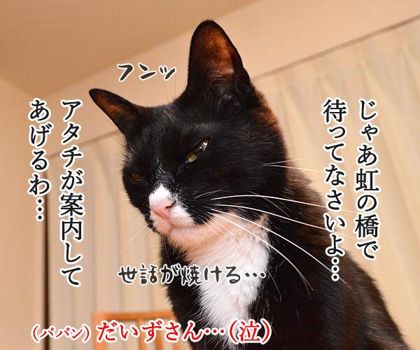 パパンが天国に行ったら 猫の写真で4コマ漫画 3コマ目ッ