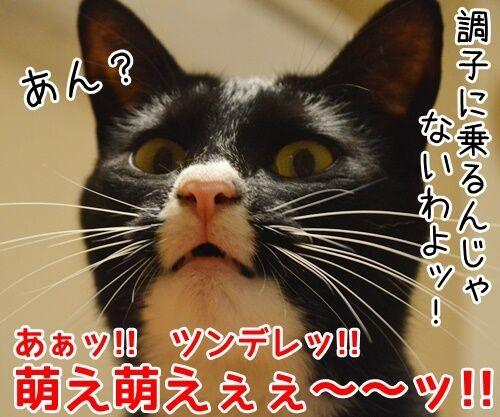 お詫びにかえて 猫の写真で4コマ漫画 4コマ目ッ