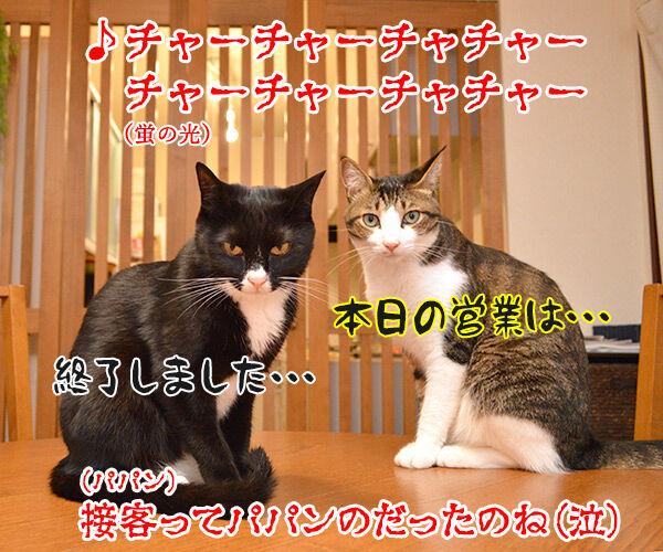 パパンの知らない二人のお仕事 猫の写真で4コマ漫画 4コマ目ッ
