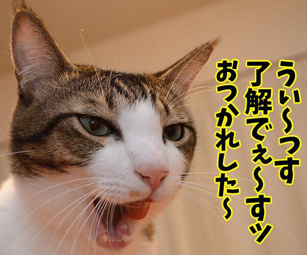 もうダメみたい… 猫の写真で4コマ漫画 3コマ目ッ