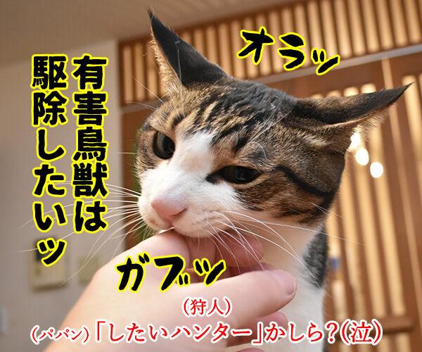 劇場版シティハンターは大ヒット上映中なのよッ 猫の写真で4コマ漫画 3コマ目ッ