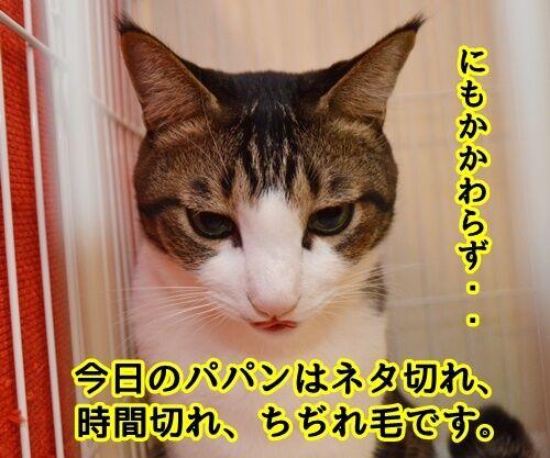 お世話になっております。 猫の写真で4コマ漫画 2コマ目ッ