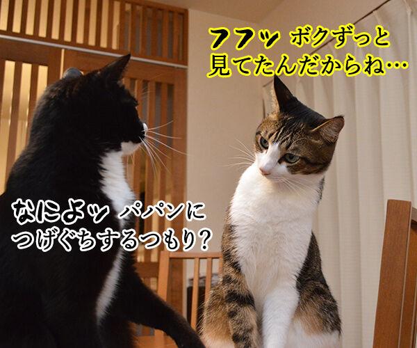 するつもり 猫の写真で4コマ漫画 3コマ目ッ