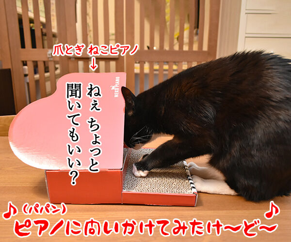 ピアノに問いかけてみて? 猫の写真で4コマ漫画 2コマ目ッ
