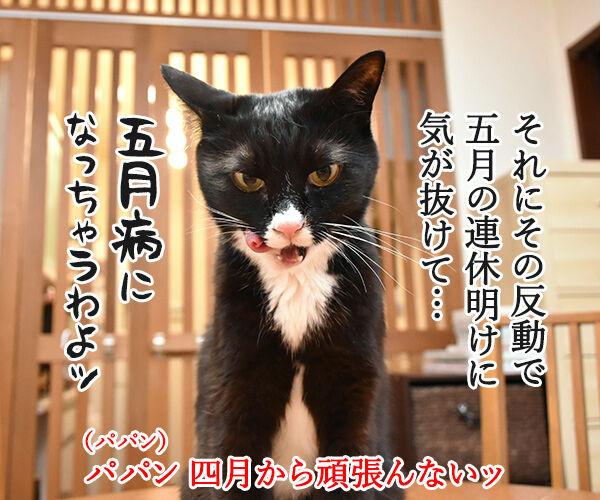 新年度だからって頑張りすぎちゃダメなのよッ 猫の写真で4コマ漫画 3コマ目ッ