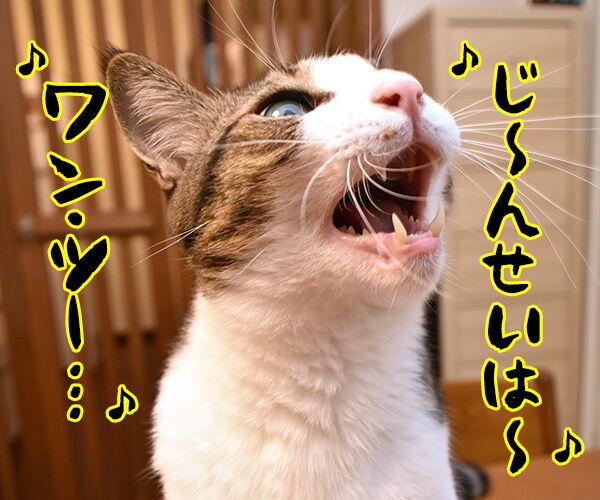 ワン・ツー ワン・ツー しあわせは歩いてこないのよッ 猫の写真で4コマ漫画 3コマ目ッ