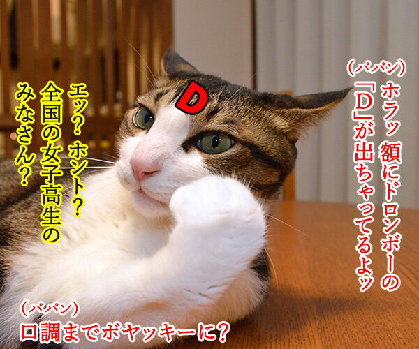 そんなにボヤいてると…… 猫の写真で4コマ漫画 3コマ目ッ