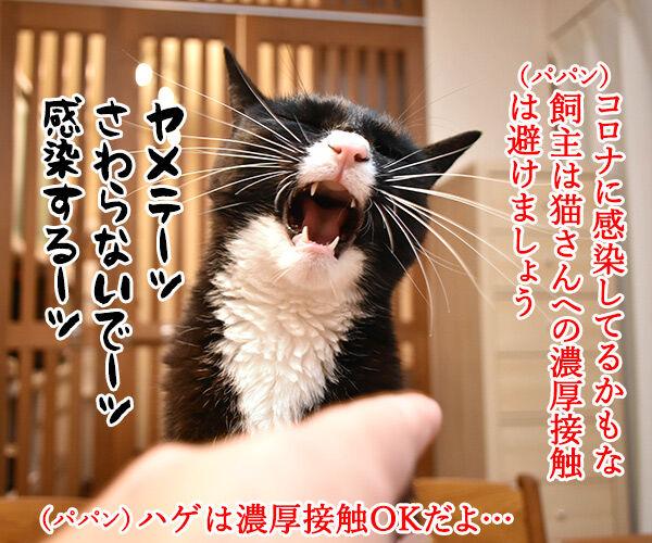飼主から猫さんにコロナが感染しちゃったのよッ 猫の写真で4コマ漫画 2コマ目ッ