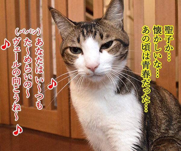 夏の扉 猫の写真で4コマ漫画 3コマ目ッ