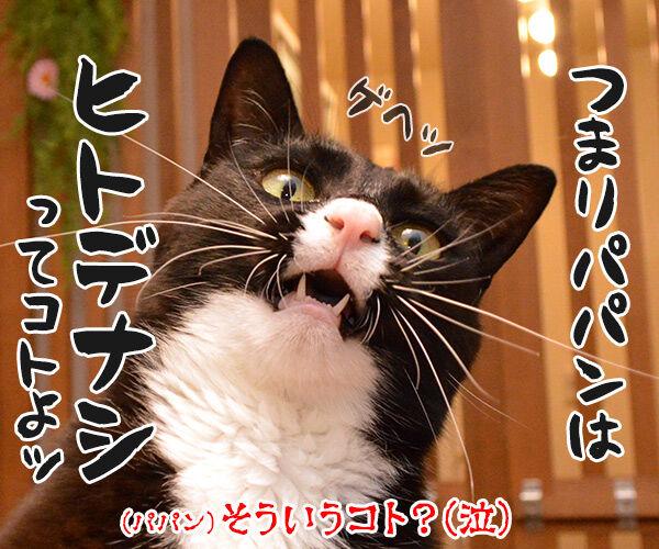ネコは飼い主をネコと思っている? 猫の写真で4コマ漫画 4コマ目ッ