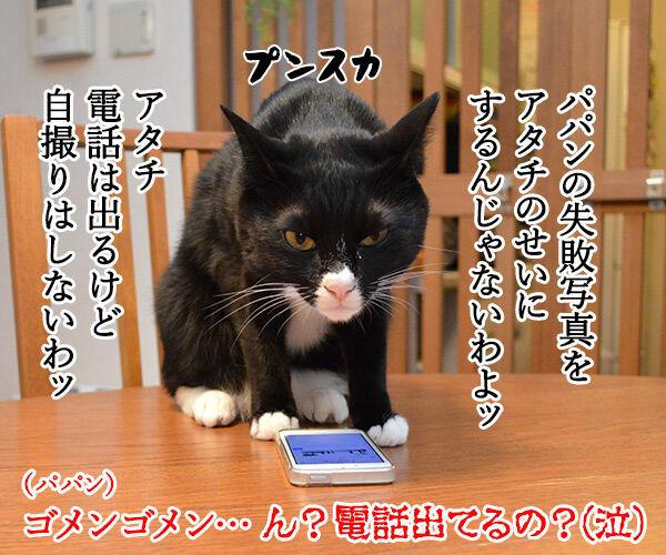 自撮り 猫の写真で4コマ漫画 4コマ目ッ