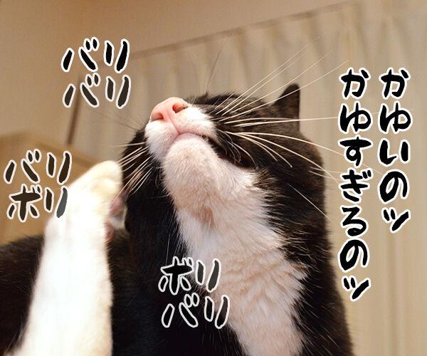 アタチ かゆいのッ 猫の写真で4コマ漫画 2コマ目ッ