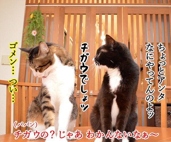 今日はジョン・レノンさんが亡くなられた日なんですってッ 猫の写真で4コマ漫画 3コマ目ッ